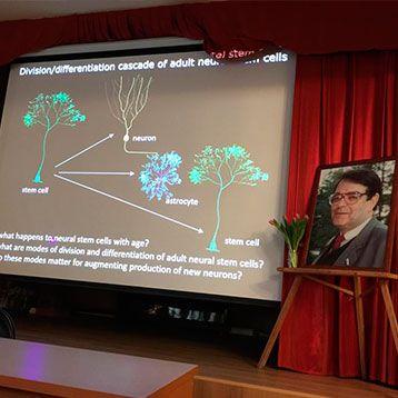 Новость: Жизненный цикл стволовых клеток мозга